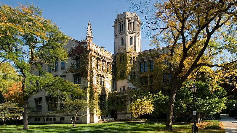 The beautiful trees at the University of Chicago.